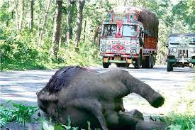killedlelephant calf in bandipura india dailymail