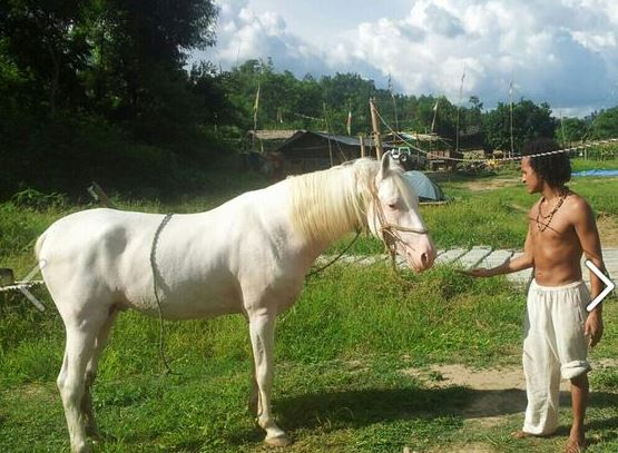 his white horse
