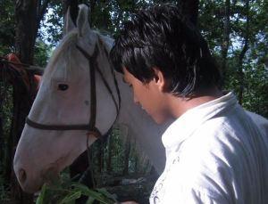 nis white horse